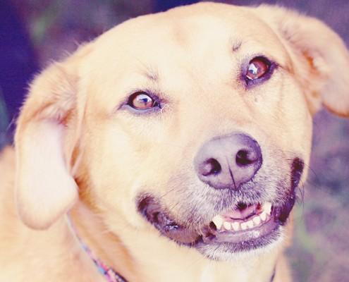 top-quality-pet-sitting-bonded-insured-nj-petsitters