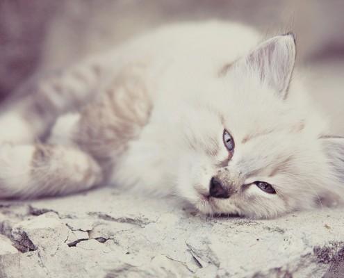 top-quality-pet-sitting-bonded-insured-oldwick-nj-cat-care