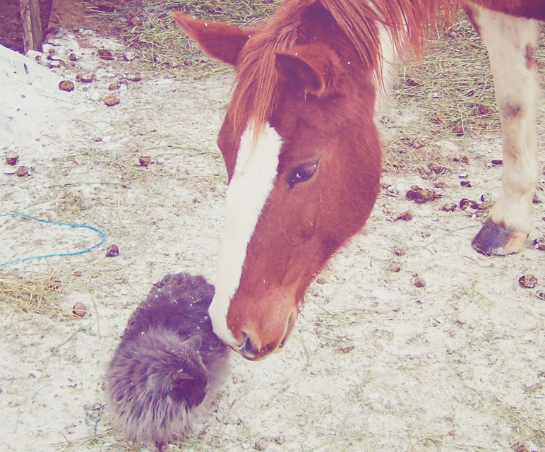 top-quality-pet-sitting-nj-farm-animals