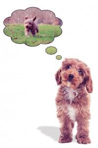 Puppy Potty, Play, Run & YumYum